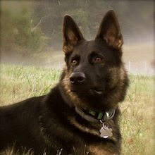 K9 Hunter-profile 2016