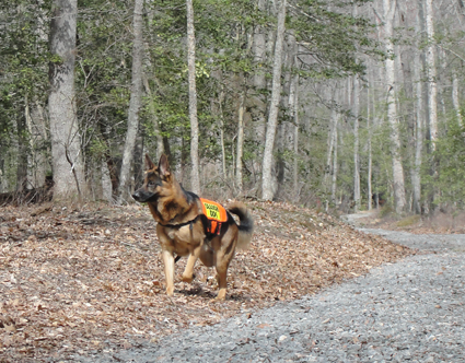 K9 Topas at Caledon Natural Area