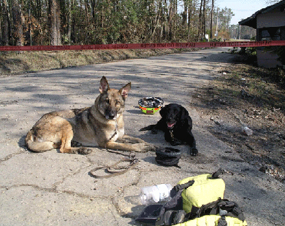 K9 Ulee and K9 Georgia at Katrina