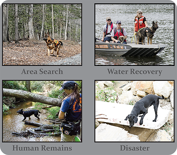 search dog types